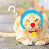 ドラえもんコスプレの猫