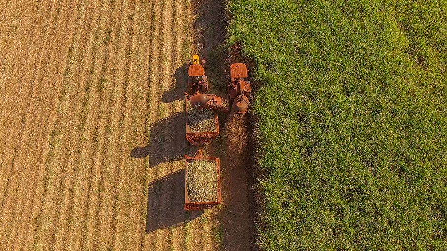 サトウキビ畑の収穫
