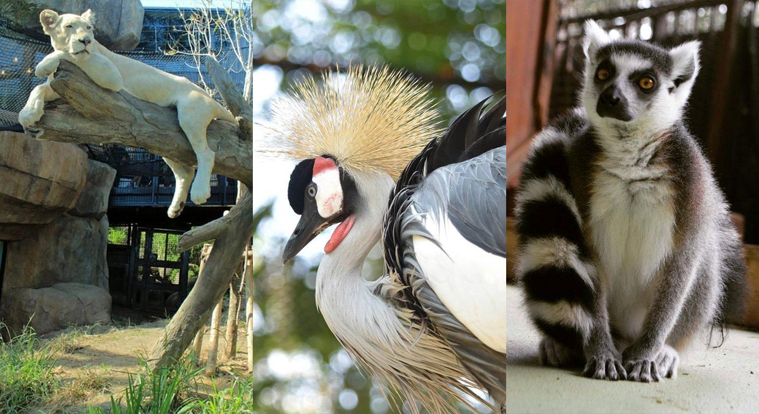 沖縄のふれあい動物園
